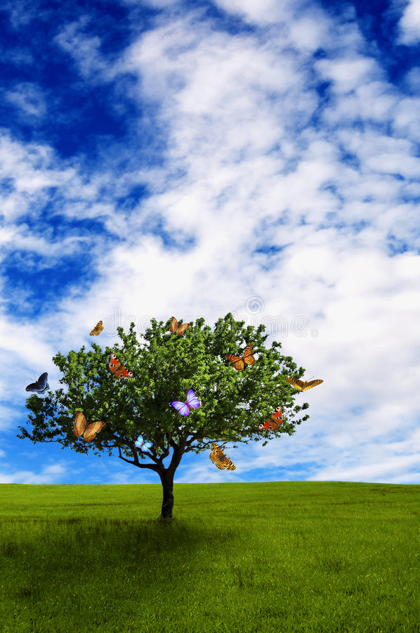 Download Tree with butterflies stock image. Image of insect, sustainable - 9076859