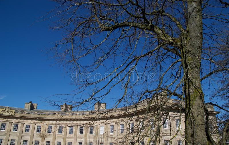 Tree and Buxton crescent buildings. Buxton Derbyshire England united kingdom royalty free stock photo