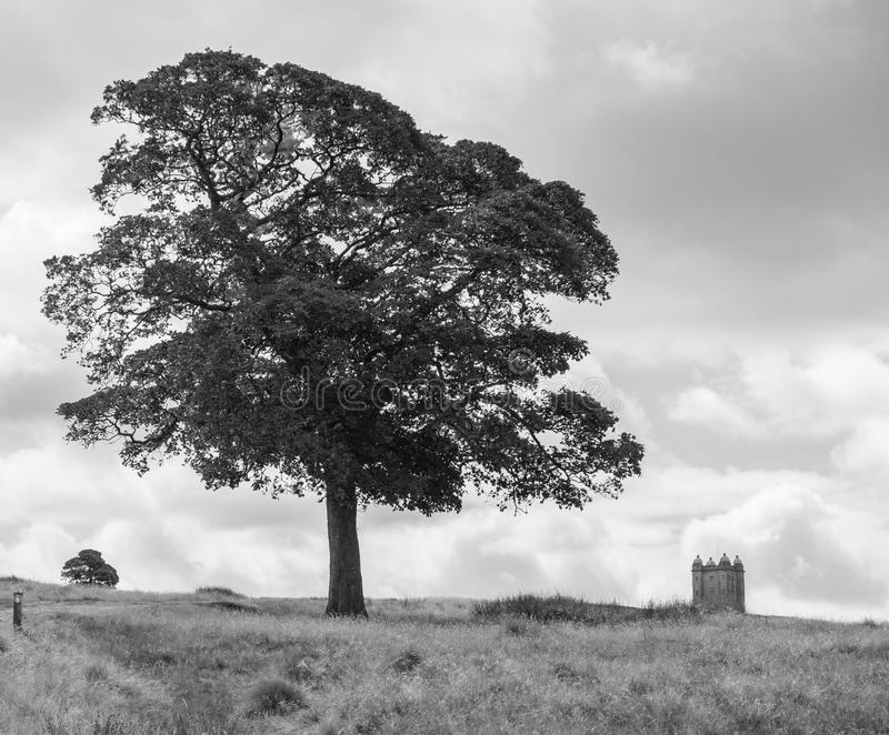 Tree and The Cage tower in the distance in Lyme Park estate in b. Tree and The Cage tower in the distance in Lyme Park estate in monochrome. The estate is being stock image