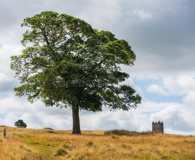 Tree and The Cage tower in the distance, Peak District, UK. Tree and The Cage tower of the National Trust Lyme in the distance in the Peak District, Cheshire, UK royalty free stock image