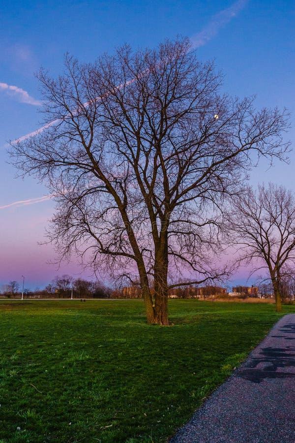 Tree in Calvert Vaux Park royalty free stock image