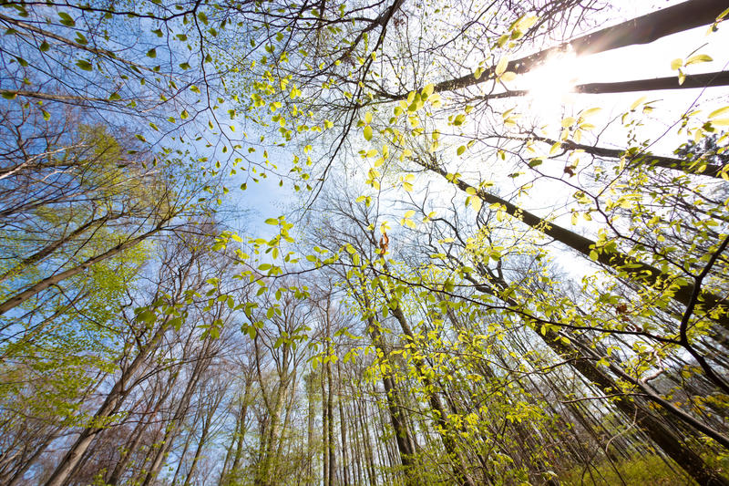 Download Tree Canopy Royalty Free Stock Images - Image: 14657239