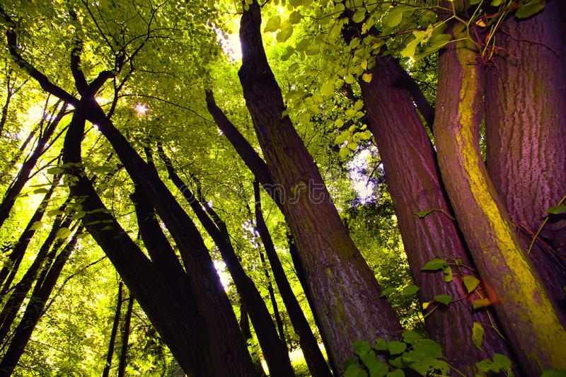 Download Tree canopy stock photo. Image of beautiful, gold, scenery - 15797456