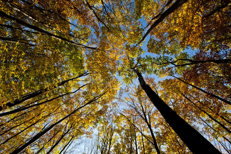 Tree canopy. royalty free stock images