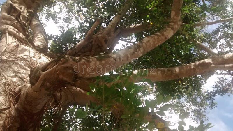 Tree Canopy Free Public Domain Cc0 Image