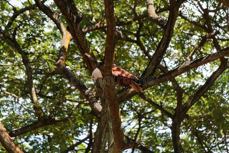 Tree canopy royalty free stock photography