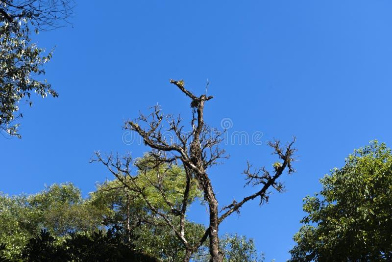 Tree canopy under blue sky royalty free stock photos