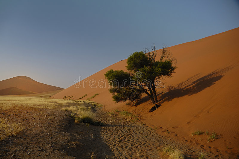 Tree captured by Sand royalty free stock photography