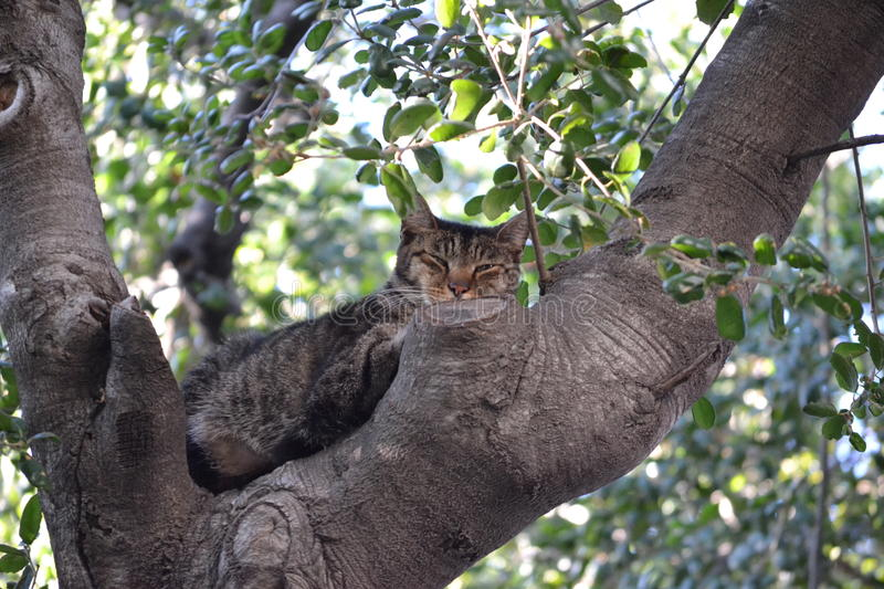 Tree cat royalty free stock images