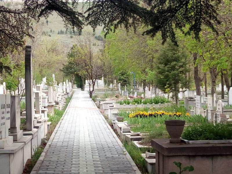 Tree, Cemetery, Flower, Walkway stock image