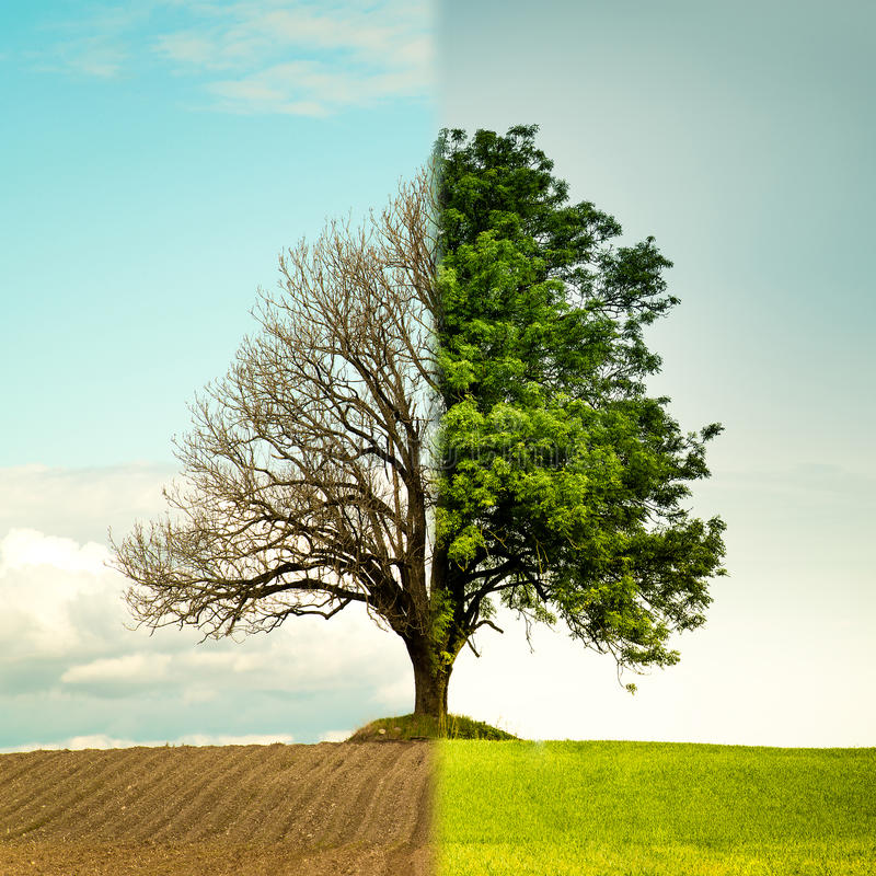 Tree change from spring to summer. royalty free stock photo