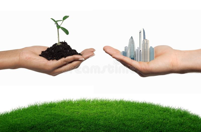 Tree or city royalty free stock image