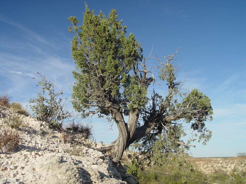 Tree on a cliff stock photography