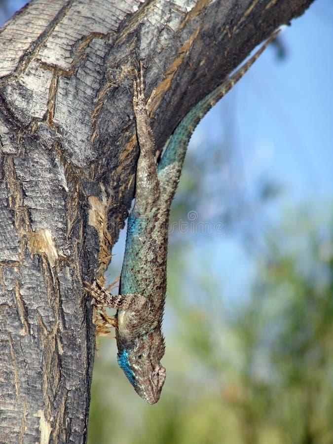 Tree climb stock photos