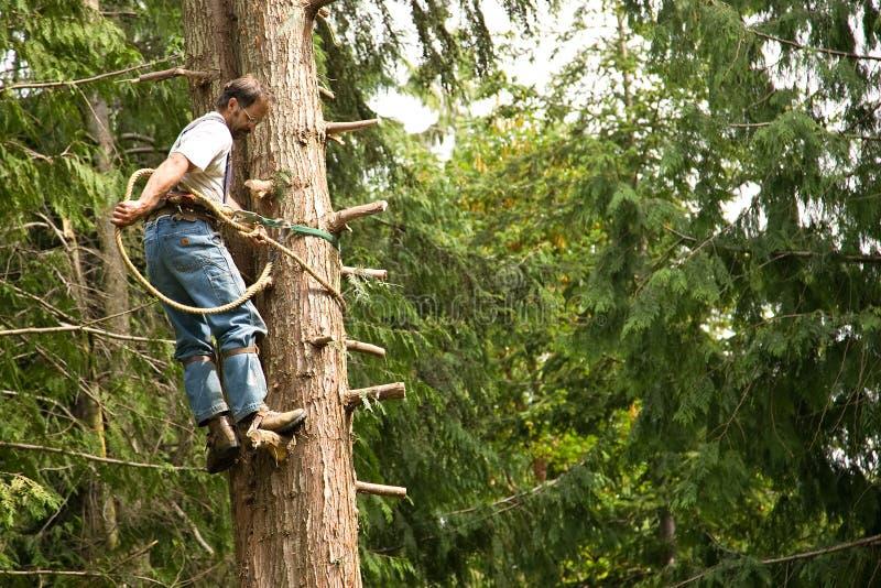 Tree climber and logger stock photos