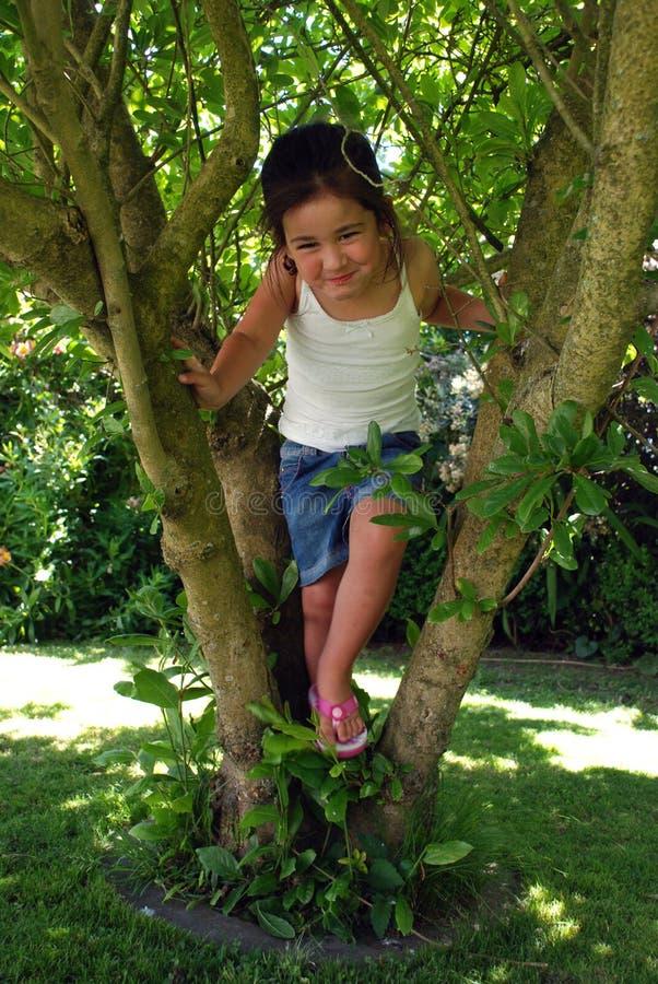 Tree climbing royalty free stock photography