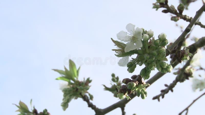 Tree close-up stock footage