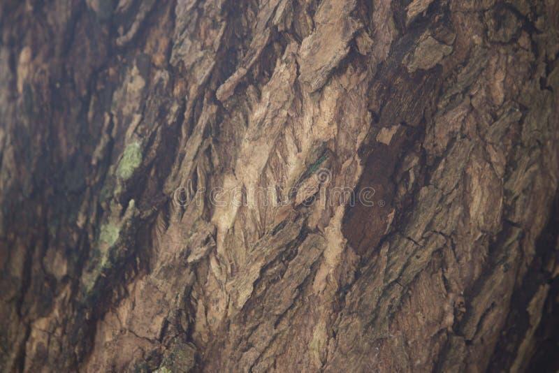 Tree in Closeup Photo royalty free stock photography