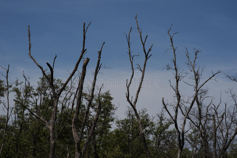 Tree with cloud blue sky stock photos