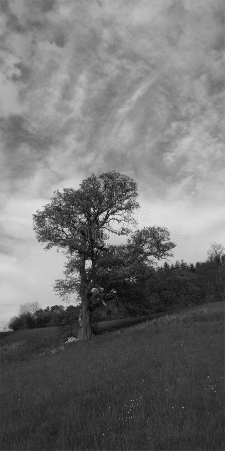 Download Tree and Clouds stock photo. Image of tree, black, rural - 123974