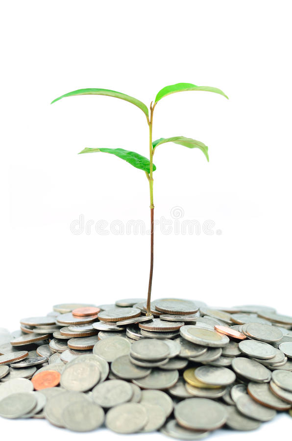 Tree on coins. A tree growing on coins royalty free stock image