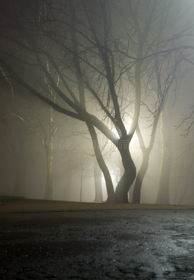 Download Tree is in cold light stock image. Image of moody, dusk - 1631819