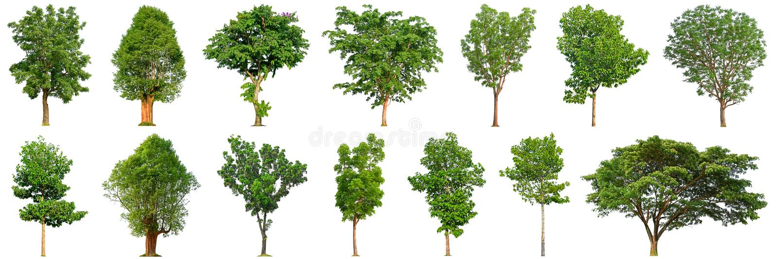 Tree collection isolated on white background 14 trees. royalty free stock images