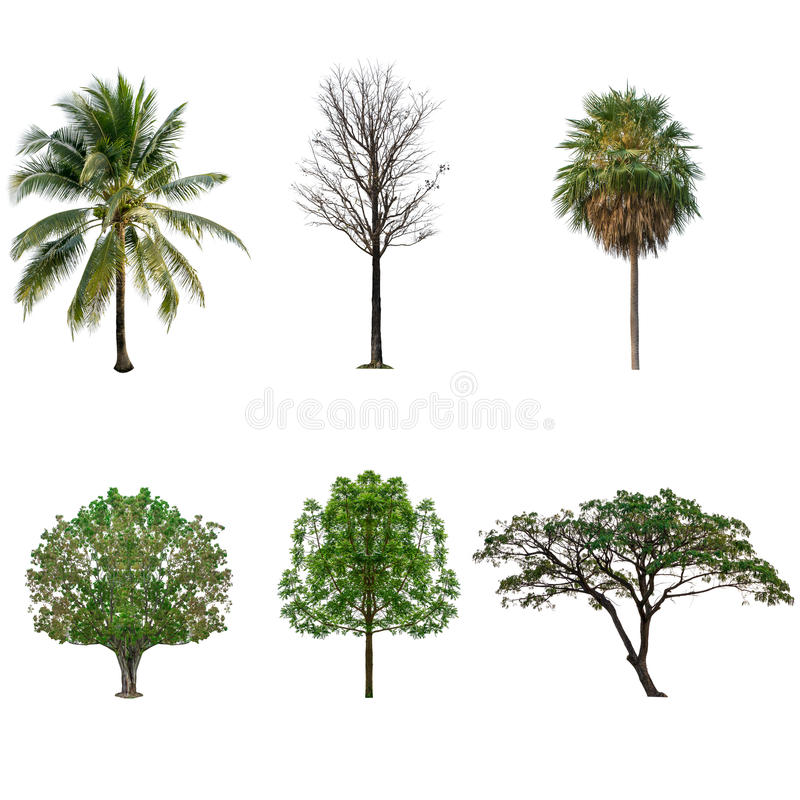Tree collection set isolated on white stock image