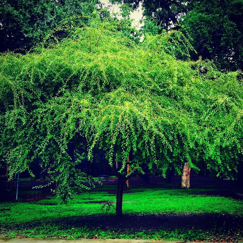 Tree in color royalty free stock photo