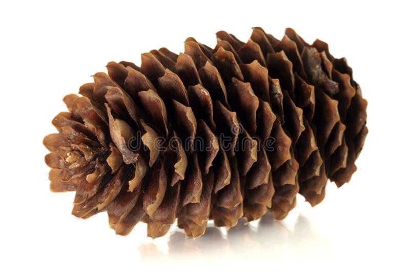 Download Tree cone stock photo. Image of orange, tree, disclosed - 24026538