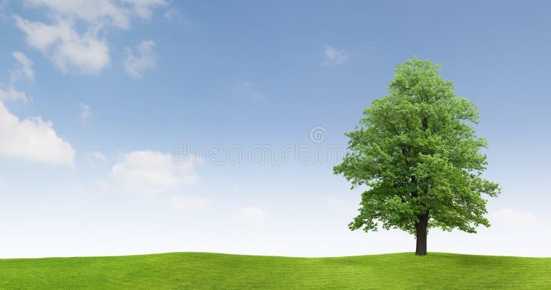 Tree in countryside field