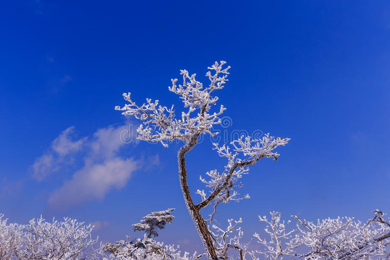 Tree is cover by snow. stock images