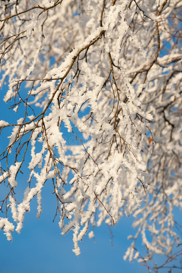 Download A Tree Covered In Frost On A Sunny Winter Day. Stock Image - Image: 26087039