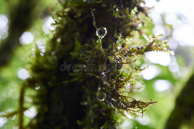 A tree covered in green moss with the dew royalty free stock photos