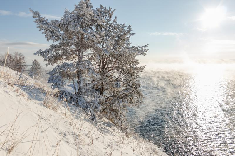 Tree covered with ice and snow on the shore of the soaring lake Baikal in winter stock images