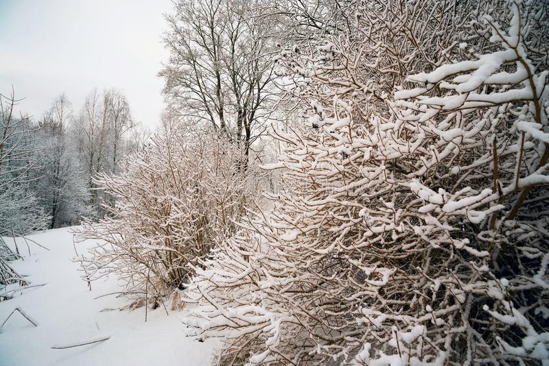 Tree covered with snow. stock image