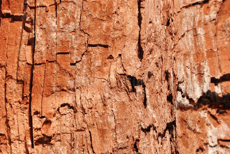 Tree cracked old brown-red trunk, horizontal background texture close up. Detail stock image