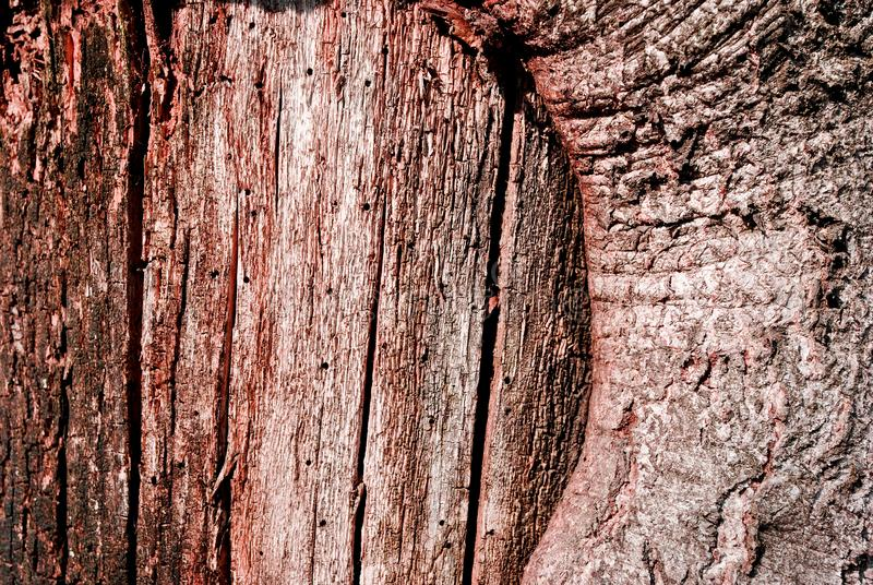 Tree cracked old brown-red trunk, horizontal background texture close up. Detail stock images