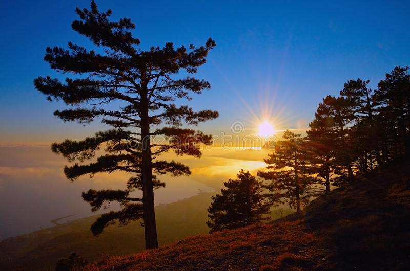 The tree on the Crimean coast of the Black sea against the background of beautiful sunset. stock images