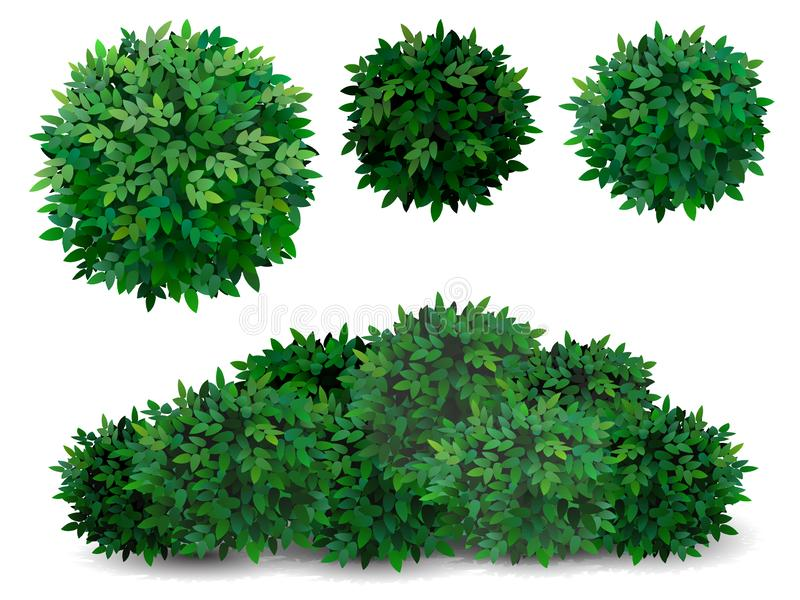 Tree crown foliage bush. Vector bush in different forms. Tree crown. Ornamental plant shrub for decorate of a park, a garden or a green fence royalty free illustration