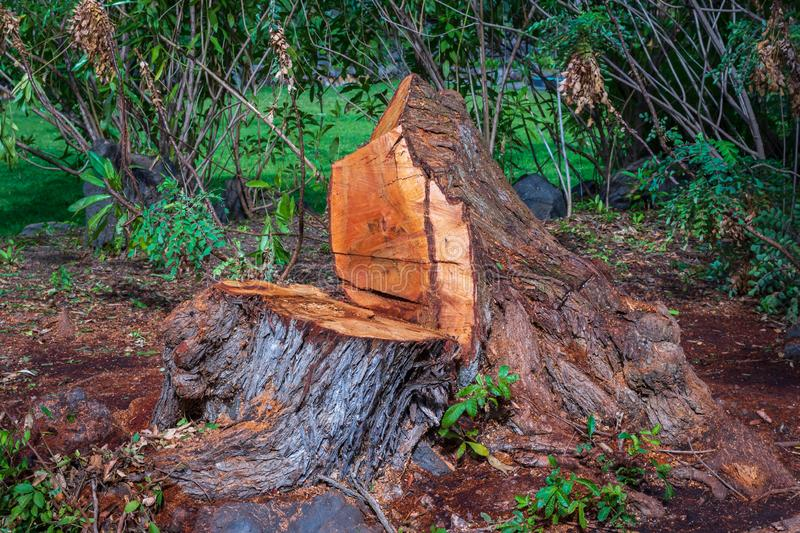 A tree is cut down with Trunk remaining, save tree royalty free stock photography