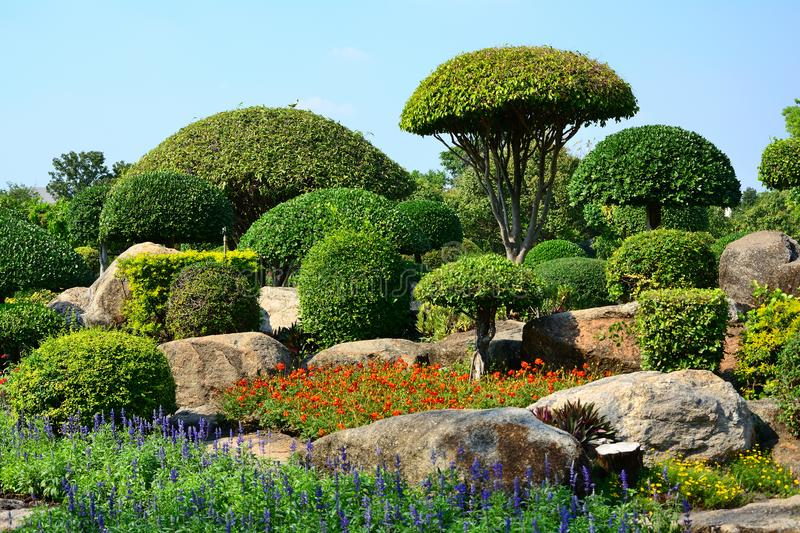 Stones In The Garden The tree is cut into mushroom shrubs with stones in the garden download the tree is cut into mushroom shrubs with stones in the garden stock image workwithnaturefo