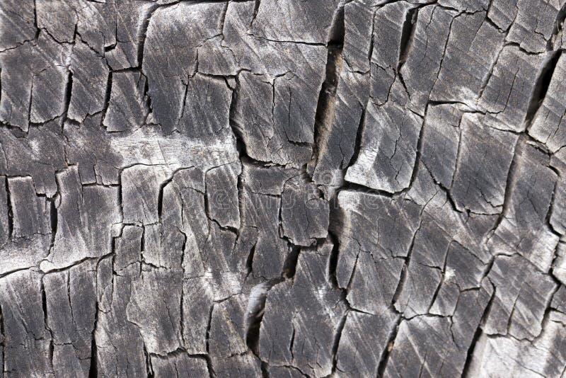 Download Tree cut trunk stock image. Image of macro, grunge, eucalyptus - 26676467