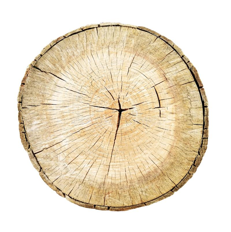 Tree cut trunk with wood rings stock images