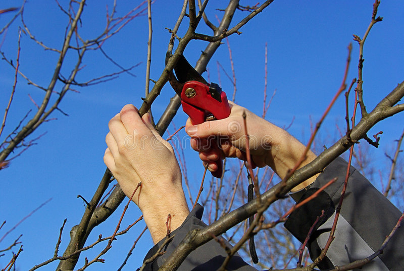 Tree cutting 20 royalty free stock photo