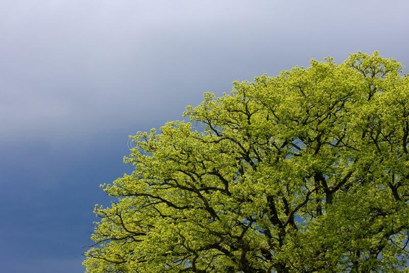tree& x27 da mola; detalhe de s foto de stock royalty free