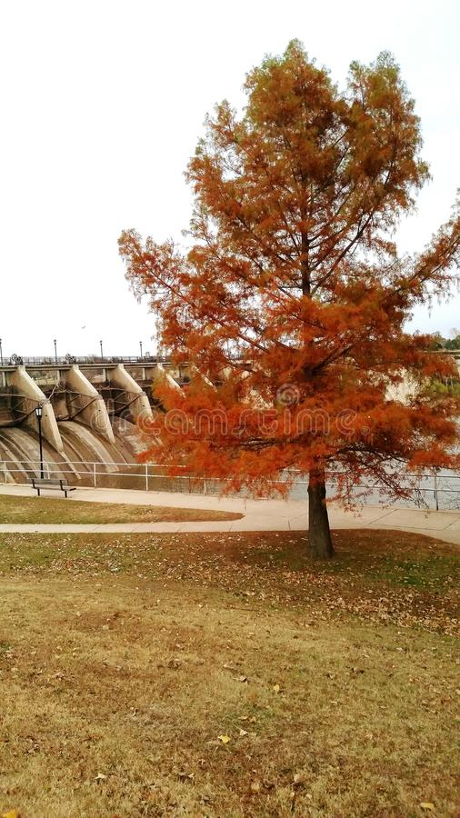 Tree by a dam stock photography