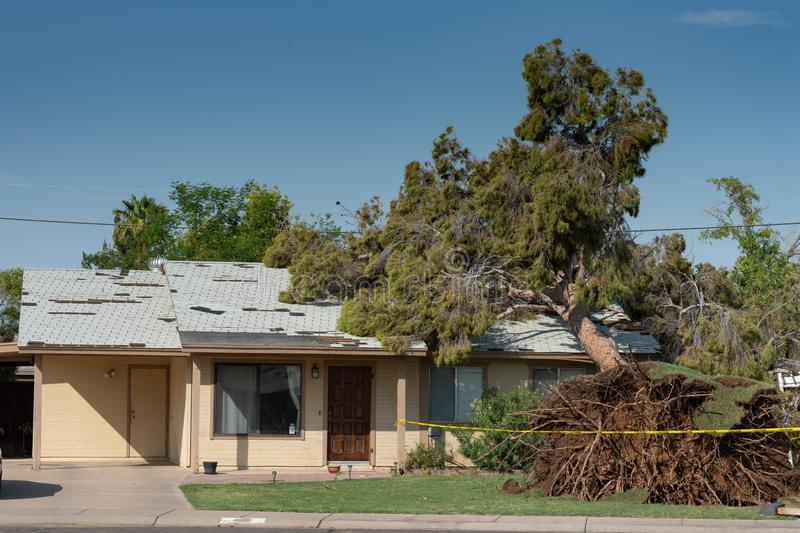 Tree Damage to Roof after Major Monsoon stock images