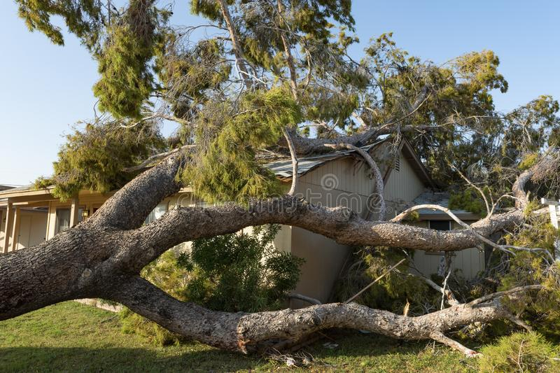 Tree Damage to Roof after Major Monsoon stock photos