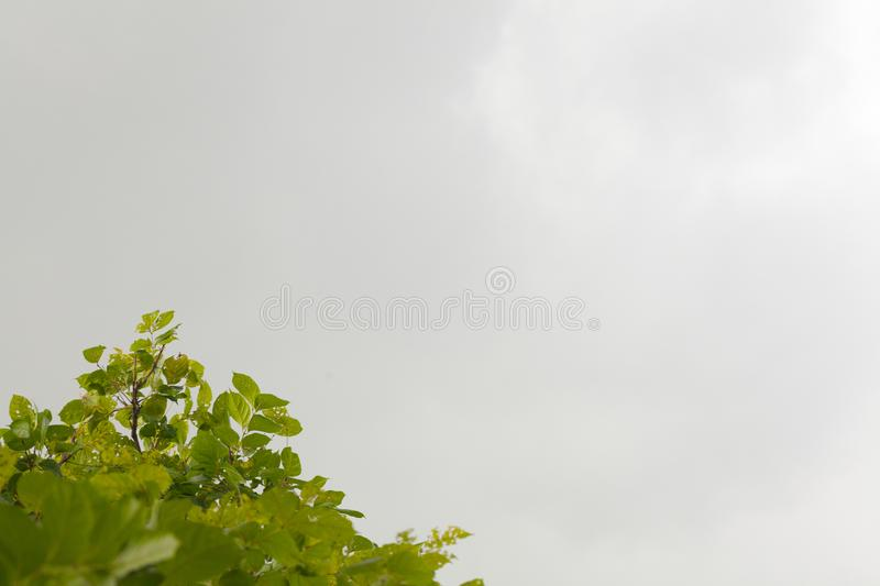 Tree and dark cloud before storm royalty free stock images